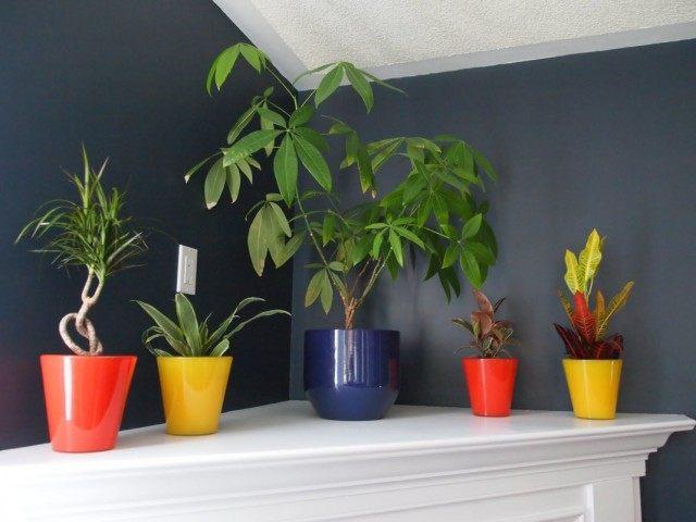 8 Самих тіньолюбних кімнатних рослин