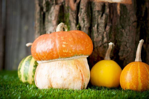 Декоративна гарбуз можна їсти, опис, 6 найпопулярніших сортів