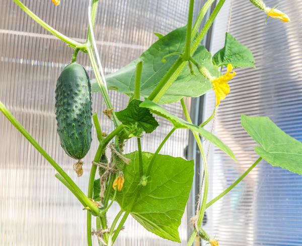 Домашній город 6 овочів, які ви можете виростити на підвіконні