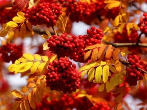 Ягоди в лісі восени