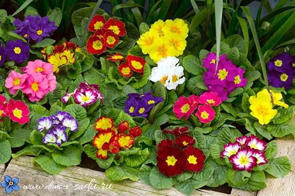 Які квіти посадити в тіні