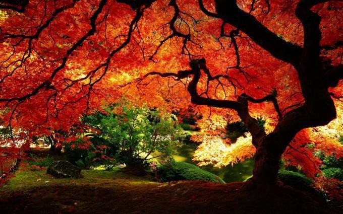 Якого кольору листя клена восени - рибальський караван