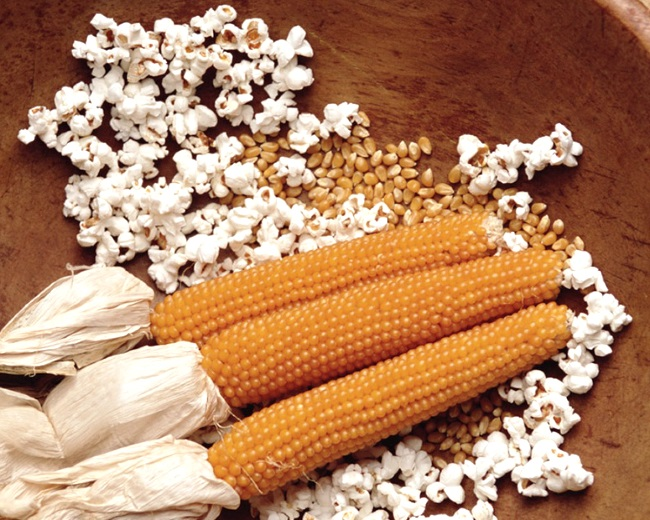 Кукурудза на попкорн вирощування і кращі сорти агропромисловий вісник