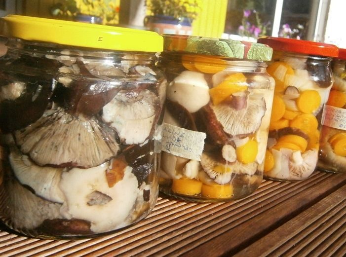 Особистий досвід солоні гриби вкрилися пліснявою, що робити дача 1