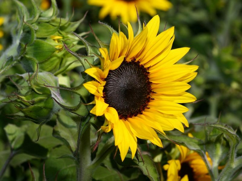 Чи можна насіння при подагрі як їсти насіння гарбуза і соняшника