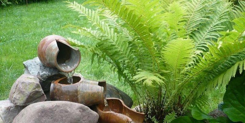 Папороть посадка, розмноження і догляд за рослиною в саду