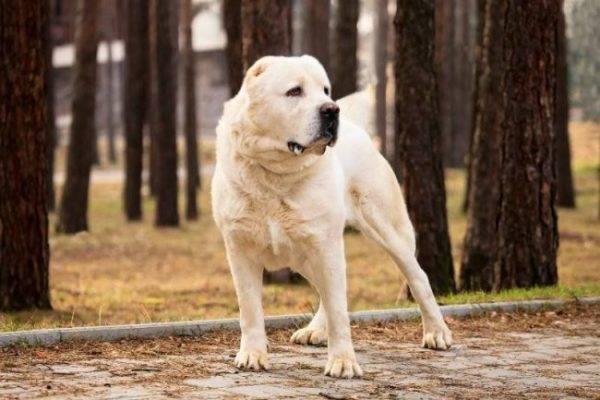 Породи собак з фотографіями і назвами