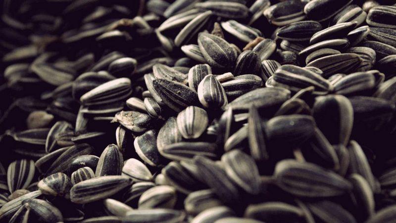 При якій температурі сушити насіння в духовці мій сад і город