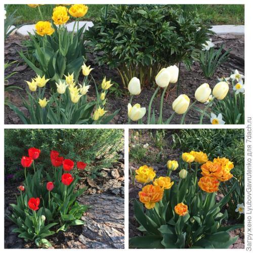 Сітка для посадки тюльпанів