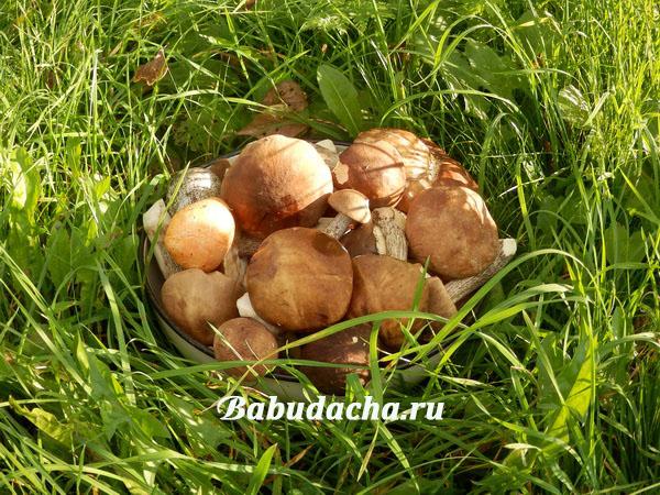 Скільки солі класти при варінні грибів
