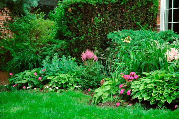 Тіньолюбні чагарники для саду багаторічні, фото і назви