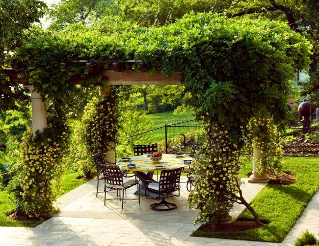 Кучеряві рослини для саду 65 розкішних фото