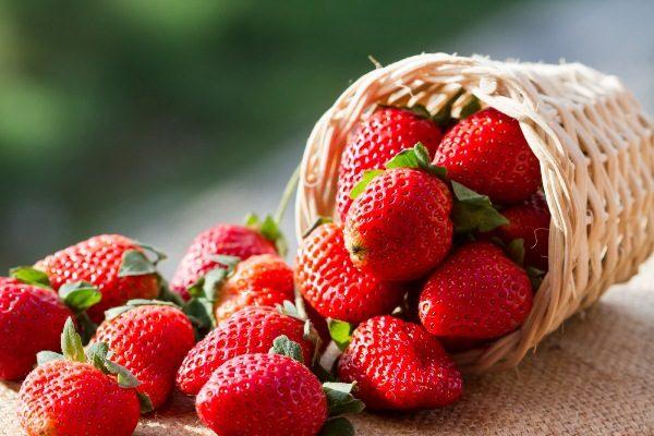 14 Краснх ягід назви і види, дерева з червоними ягодами