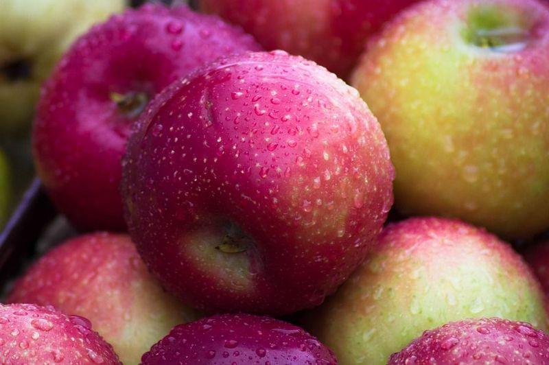 50 Сортів яблук з фото і описами, назви, пізні і ранні