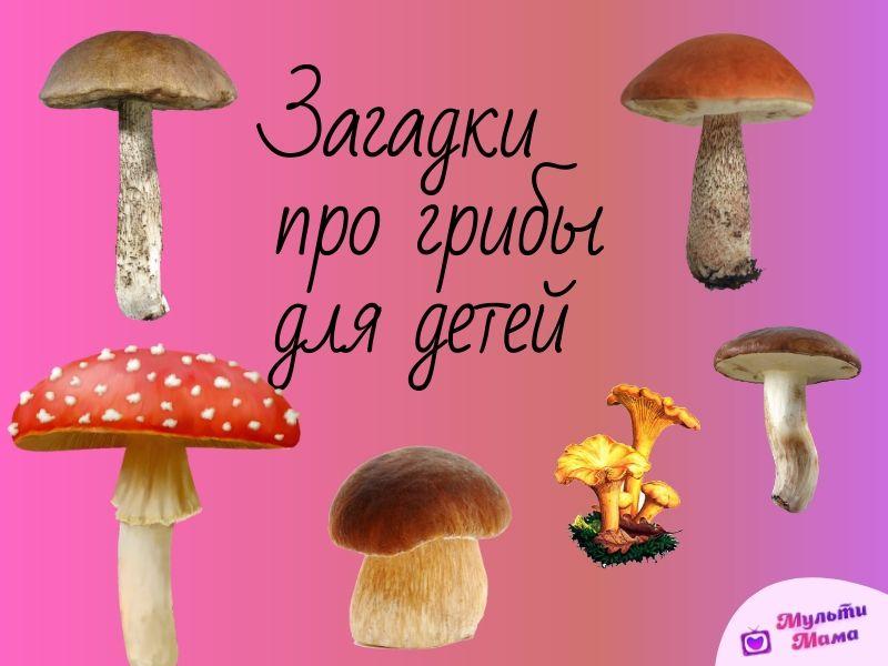 72 Кращі загадки про гриби для дітей з відповідями