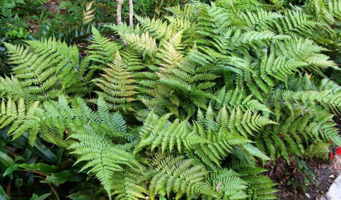 Ялиновий ліс - опис, особливості, природа і цікаві факти