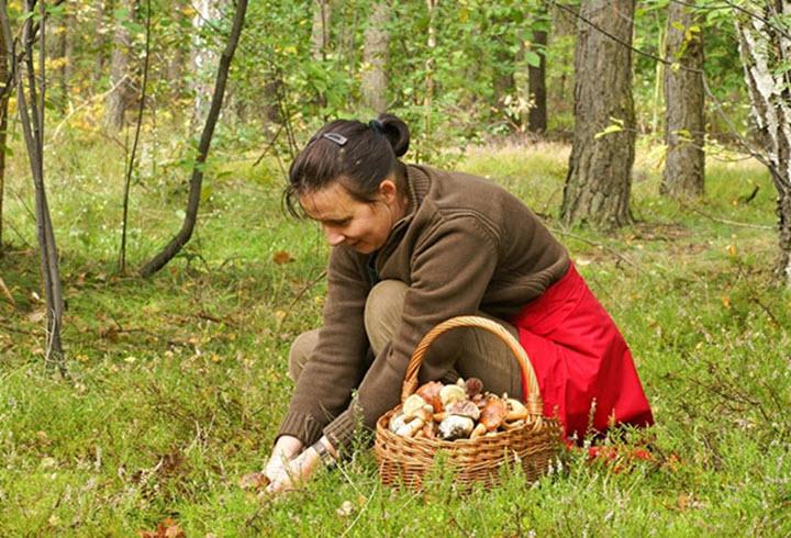Як перевірити гриби їстівні чи ні за допомогою лука