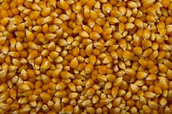 Як зробити попкорн з кукурудзи будинку як приготувати з кукурудзи попкорн