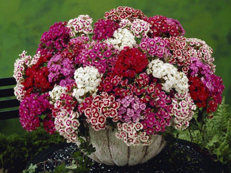 Які квіти можна садити в серпні - список