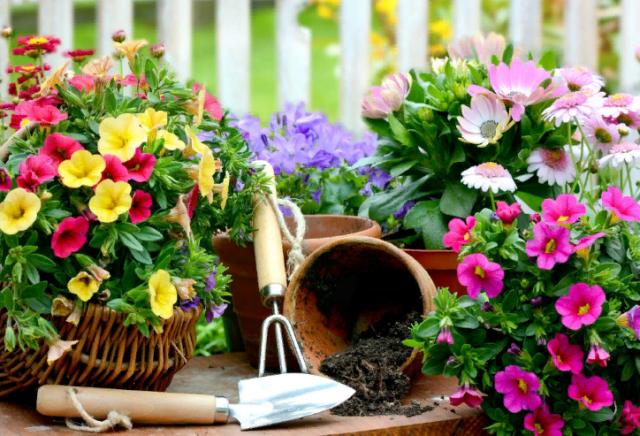 Які квіти посадити і посіяти в серпні у відкритий грунт