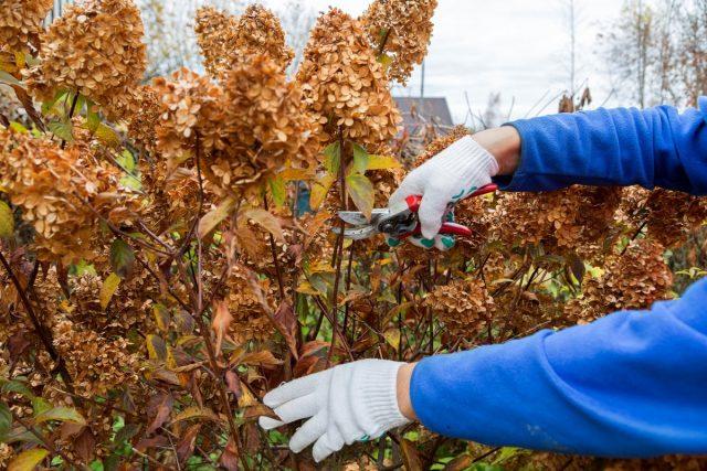 Які рослини можна обрізати на зиму, а які - необхідно особливо і правила обрізки чагарник