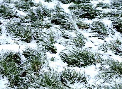 Коли косити траву останній раз перед зимою