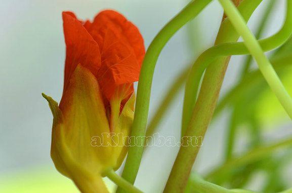 Однорічні квіти для дачі з фото і назвами - клумби і ландшафтний дизайн