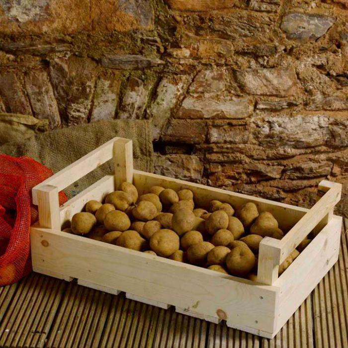 Оптимальна температура зберігання картоплі