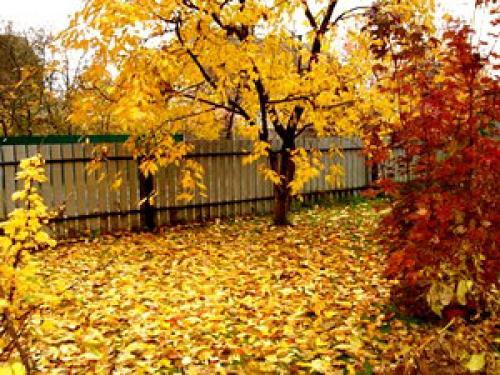 Восени люди збирають урожай