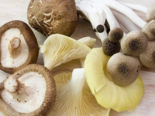 Поганки схожі на їстівні гриби