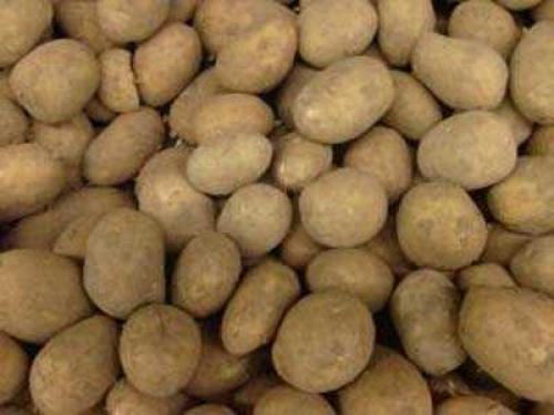 При, якій температурі картопля підмерзає