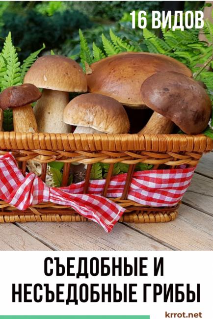 Їстівні і неїстівні гриби 16 видів