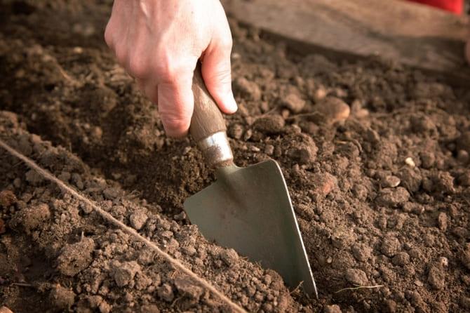 Добрива для часнику при посадці восени під зиму, які підгодівлі вносити в лунку