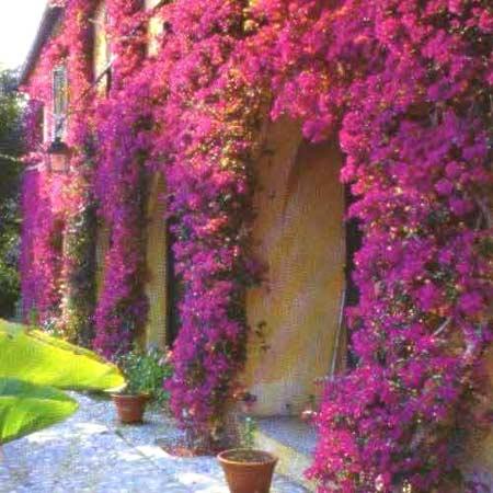 Кучеряві рослини для саду (42 фото) тіньолюбиві, багаторічні та однорічні, декоративні, квітучі