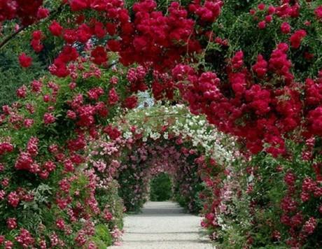 Кучеряві рослини для саду назви і опис (фото)