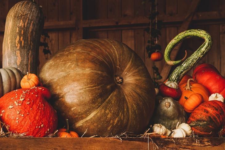 Вирощуємо гарбуза великі і маленькі в городі і вдома - поради «зеленої грядки»; agroxxi