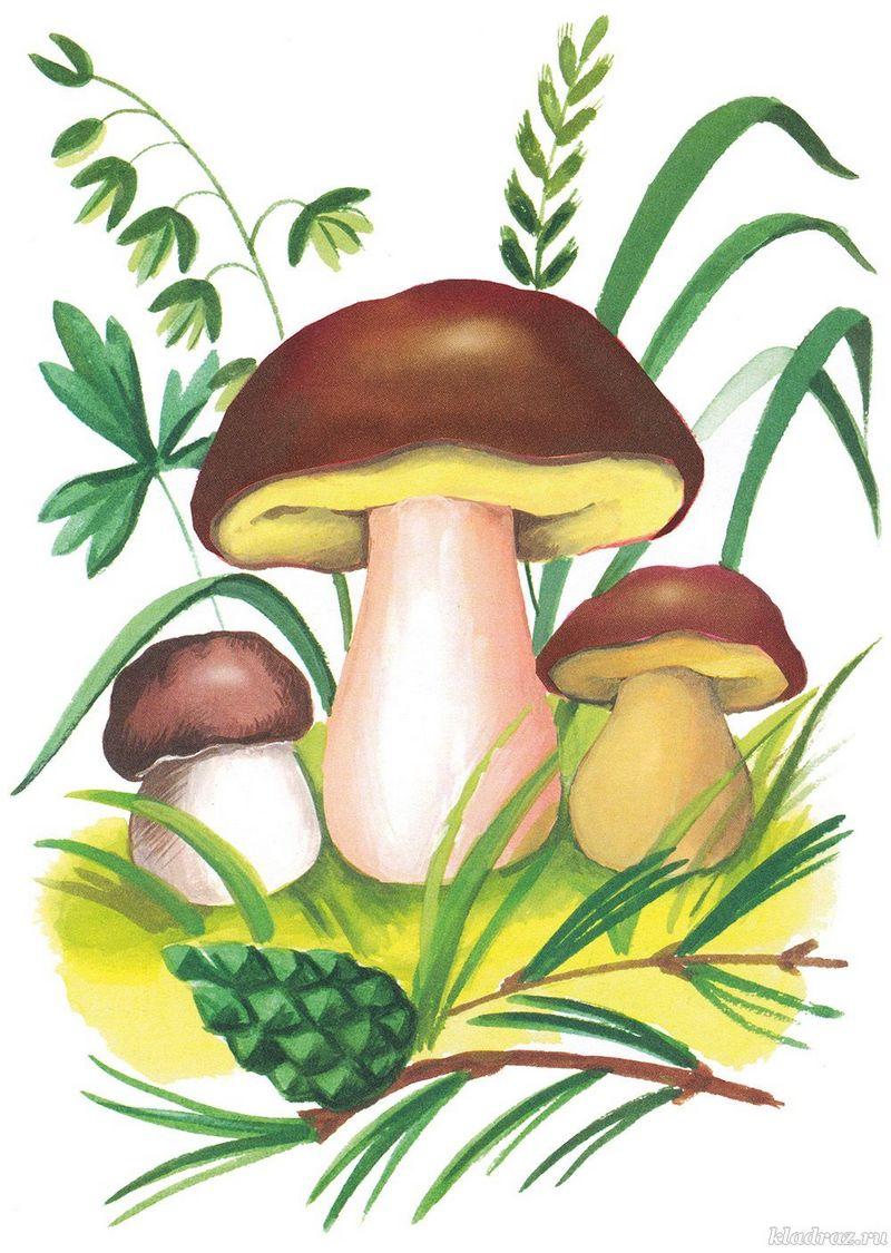 Загадки про гриби з відповідями