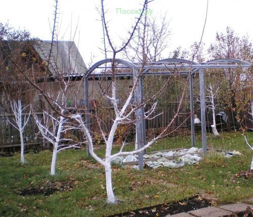 Заливка дерев на зиму